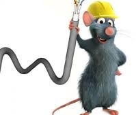 raton-come-cables